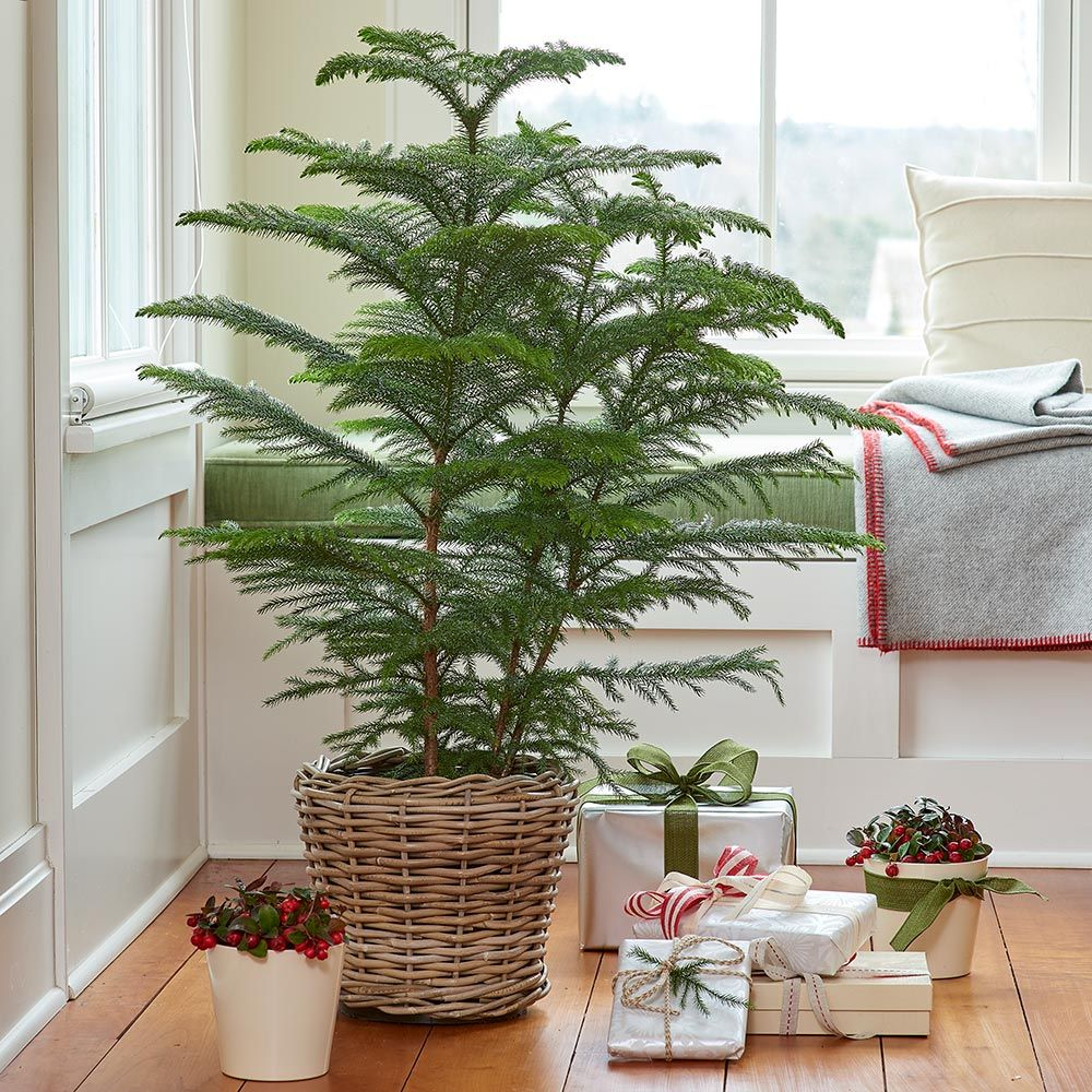 Indoor Plants & Greenery for the Holidays