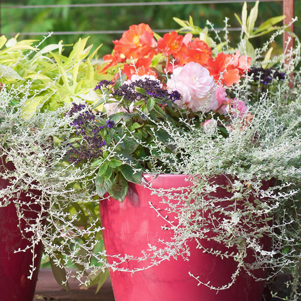 Try This: Colorful Container Planting Design