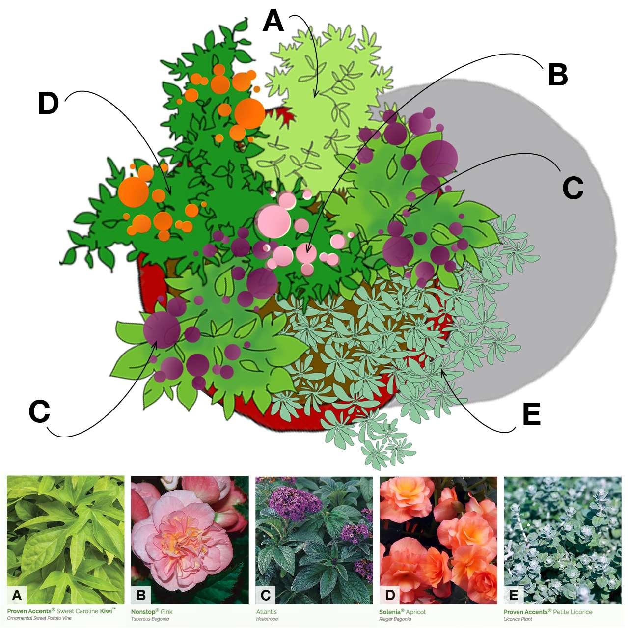 home-outside-planter-combination-part-sun-proven-winners-plants-annuals-plan-view