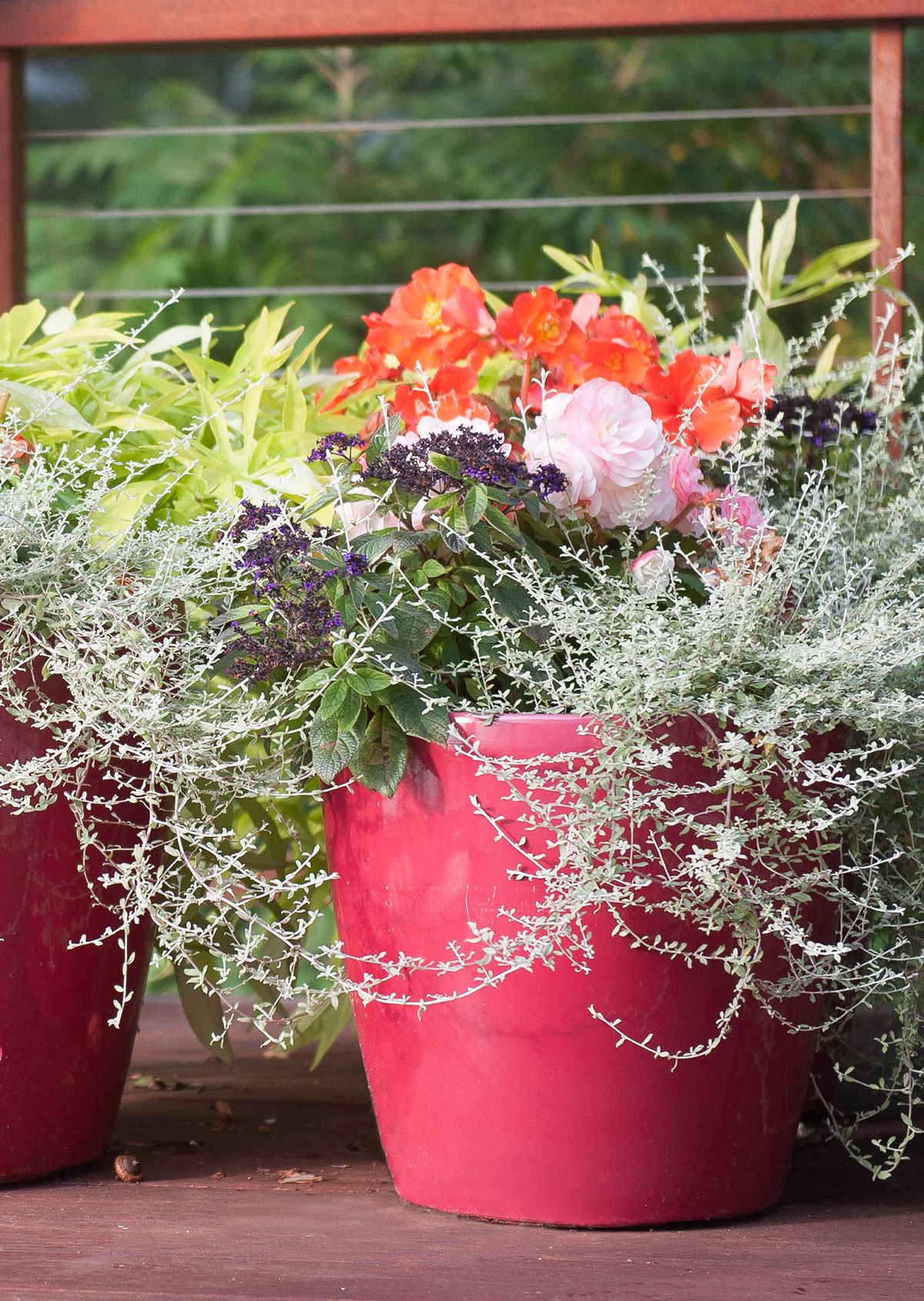 home-outside-planter-design-container-planting-seasonal-pot-part-sun-begonia-heliotrope-licorice-ipomoea-glossy-red-pot-wire-railing-deck